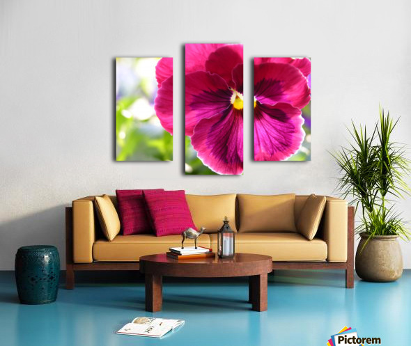 Pink Pansy Photograph Canvas print