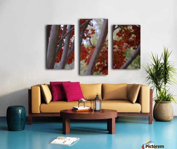Fall Foliage Photograph Canvas print