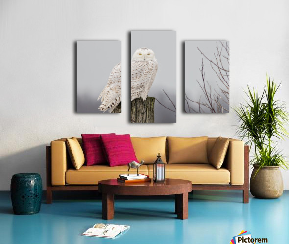 Snowy Owl on the Fence Canvas print