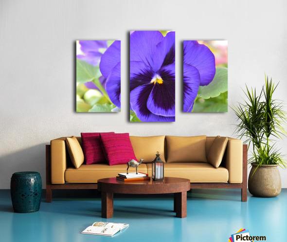 Blue Pansy Photograph Canvas print