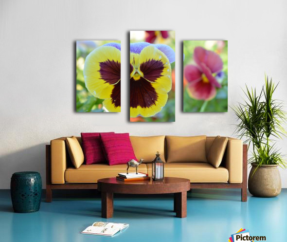 Yellow Pansy Covered In Due Photograph Canvas print