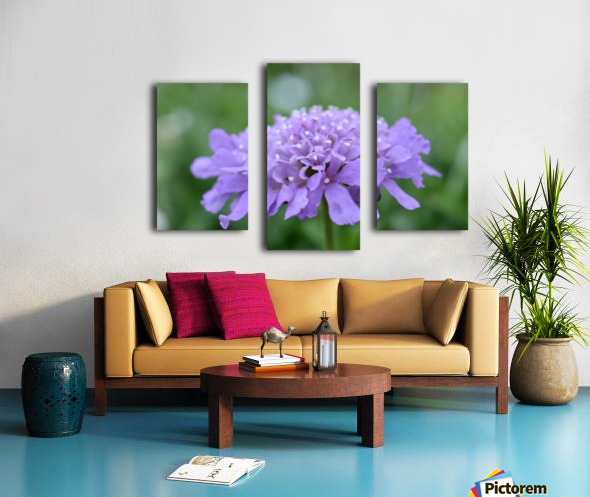 Purple Pincushion Flower Photograph  Canvas print