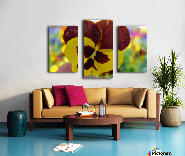 Yellow Pansy Covered In Due Drops Canvas print