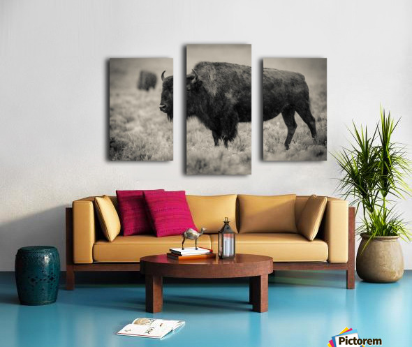 Bison of the Far West Canvas print