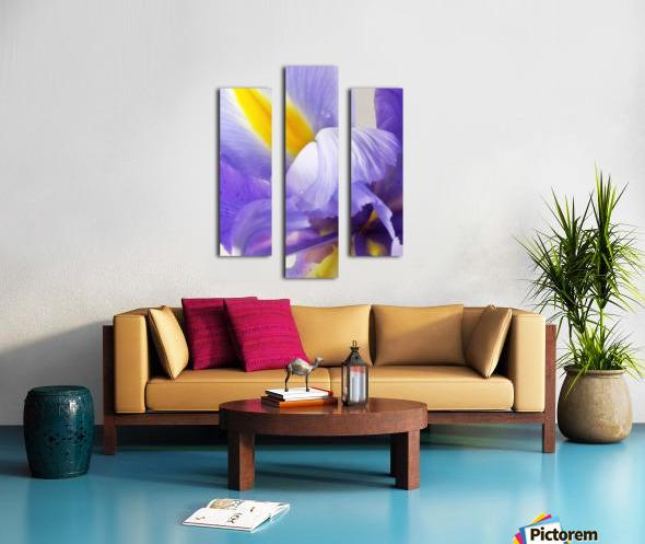Inner Iris Canvas print