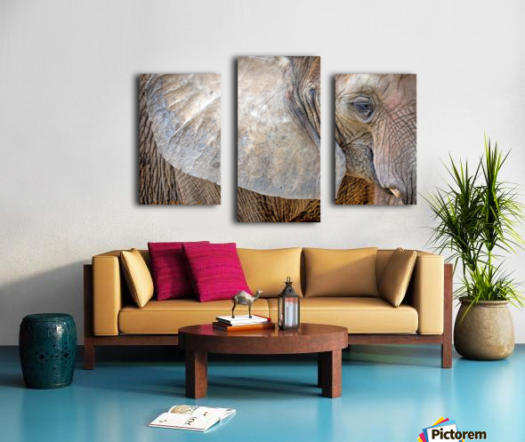 Elephant - AP 3132 Canvas print