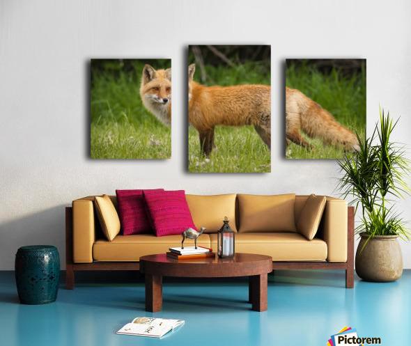 Red Fox Beauty Canvas print
