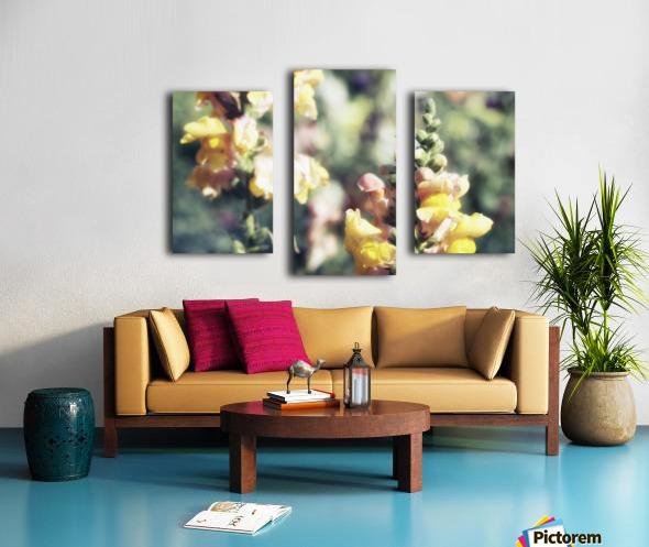 Lupinus Luteus Yellow Canvas print