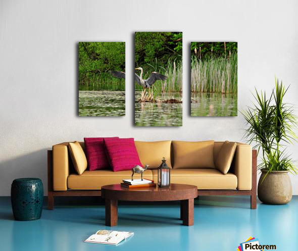 Great Blue Heron Landing Canvas print