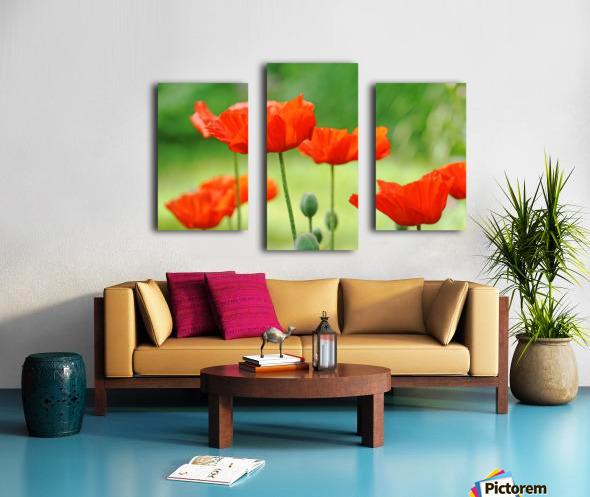 Morning Light Poppies Canvas print