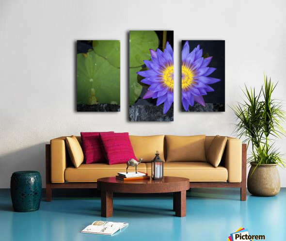 Violet Teratai Flower Canvas print