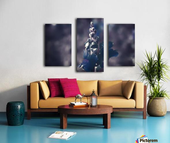 Lupinus luteus Dark Blue Canvas print