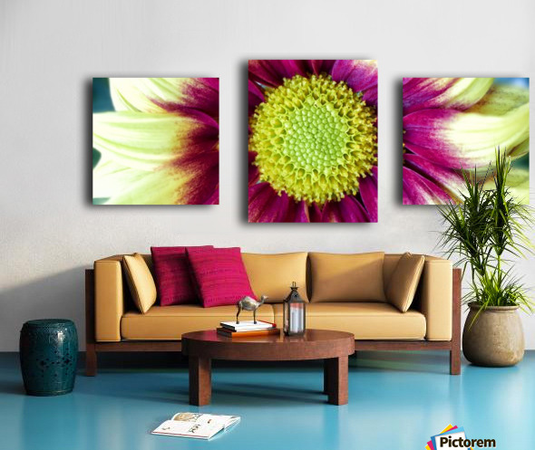 Chrysanthemum Daisy Canvas print