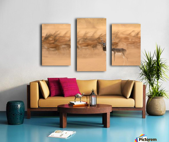 Black Bucks Canvas print