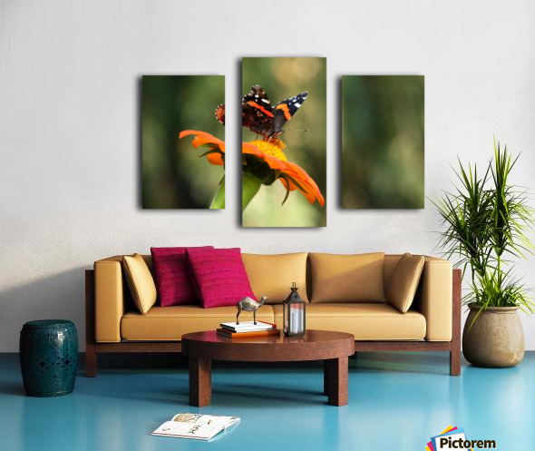 Mexican Sunflower With Red Admiral Canvas print