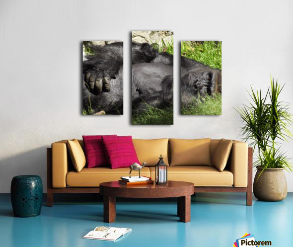 Gorilla Glare Canvas print