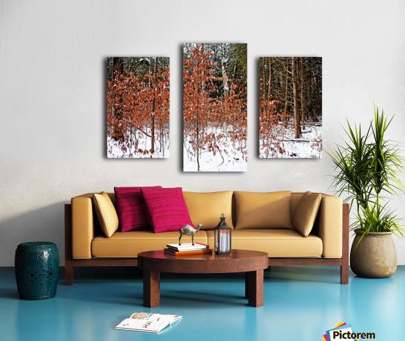 Fall Beech Trees Canvas print