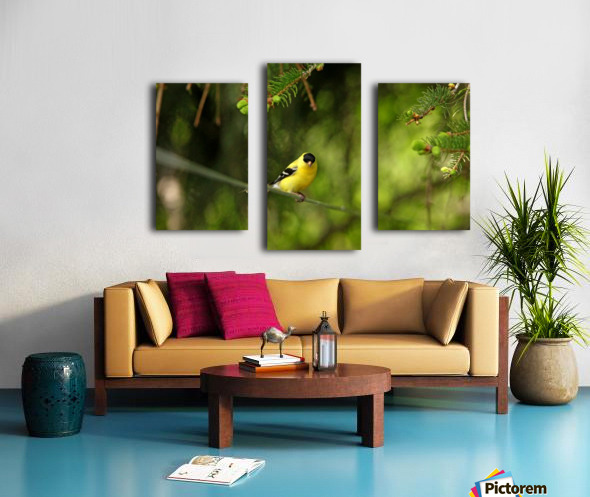 Goldfinch On The Disappearing Line Canvas print
