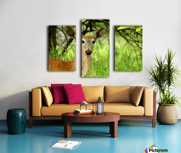 White   Tailed Deer Close Up Canvas print