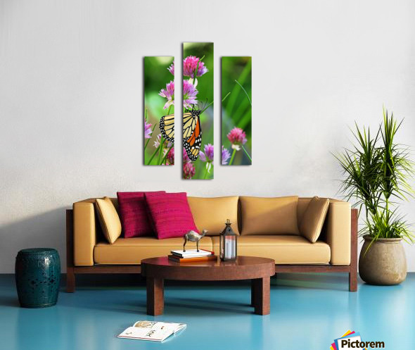 Monarch Butterfly On Chive Blooms Canvas print