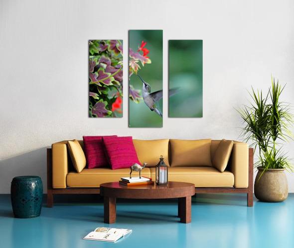 Hummingbird Loving The Orange Geranium Canvas print