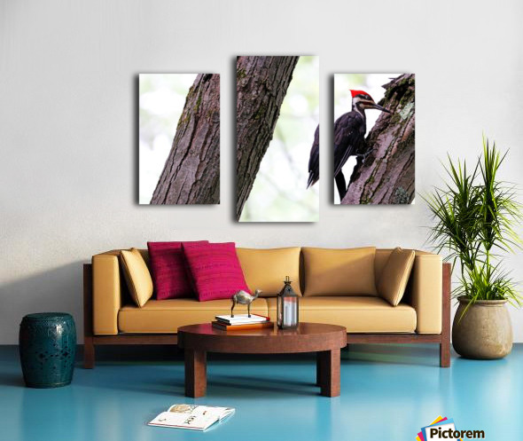 Pileated Woodpecker Checking The Cracks Canvas print