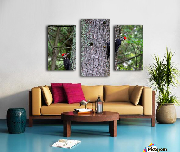 Male And Female Pileated Woodpeckers Canvas print