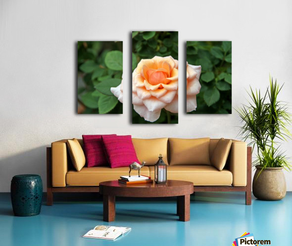 Pretty as a Rose II Canvas print