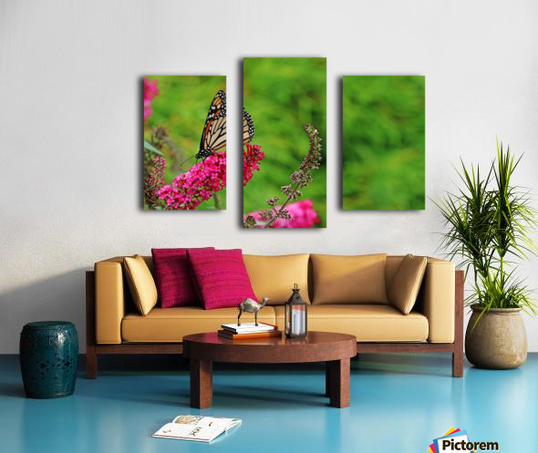 Monarch In The Garden Canvas print
