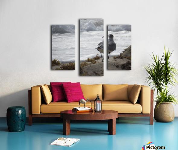 Seagull running Canvas print