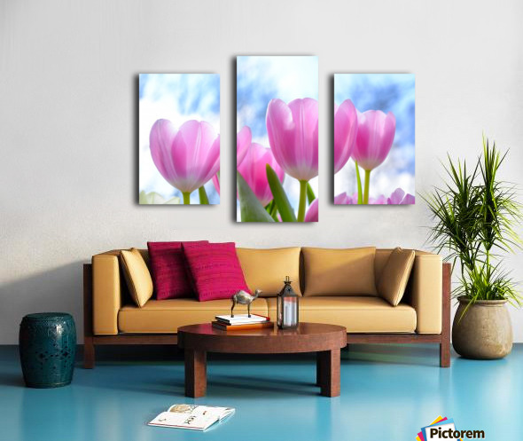 nature, tulip, flora, flower, summer, bright, petal, season, color, floral, growth, blooming, freshness, Canvas print