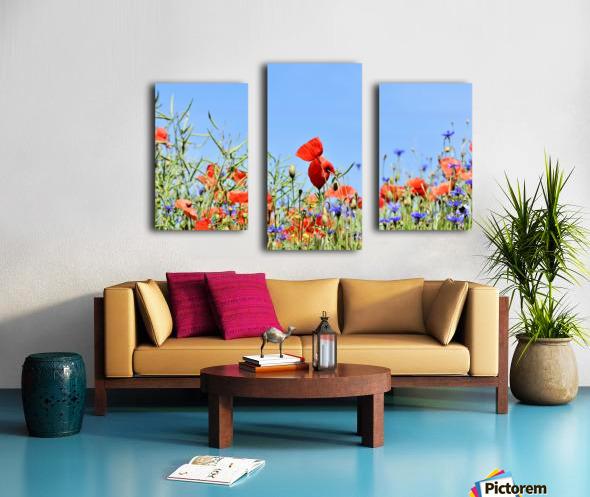 poppy, alpine cornflower, centaurea montana, flower, flower meadow, blossom, bloom, flora, plant, wild flower, garden, meadow, nature, field, petals, leaves, stems, Canvas print