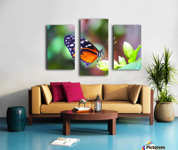 Monarch on a Bud Canvas print