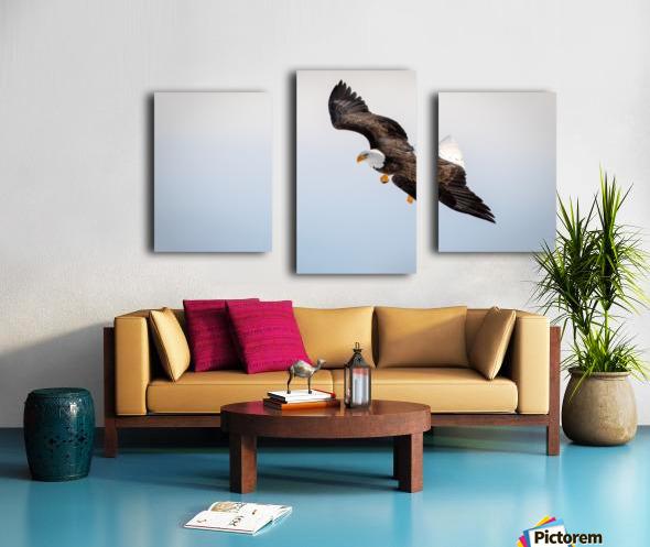 Mature Bald Eagle aiming for prey. Canvas print