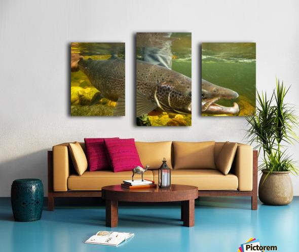 Atlantic salmon Male.  Canvas print