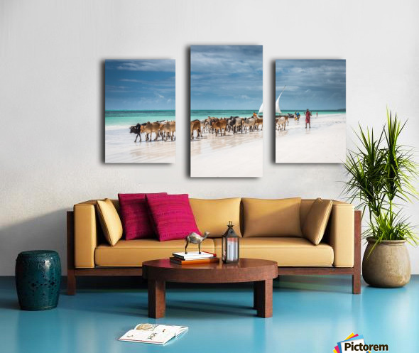 Masai cattle on Zanzibar beach Canvas print