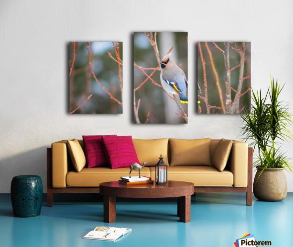 Bohemian waxwing Canvas print