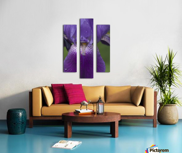 Purple Bearded Iris 3 Canvas print