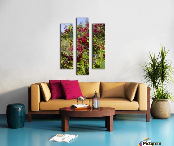 Sumac Bush in Autumn 2 Canvas print