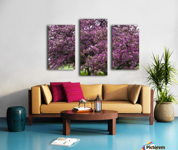 Blooming Crab Apple Trees Canvas print