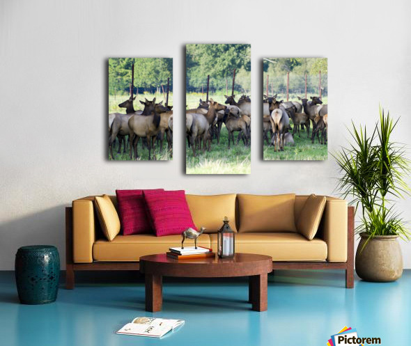 Elk Red Tailed Deer or Wapiti 16 Impression sur toile