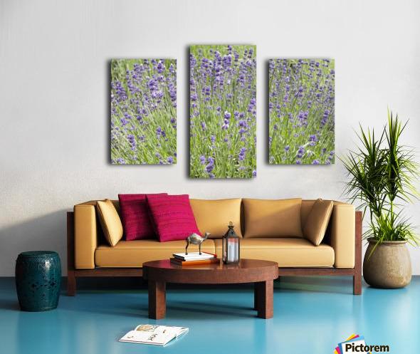 Lavender plants 7 Canvas print