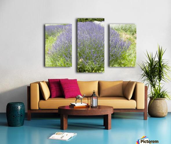 Lavender plants 1 Canvas print