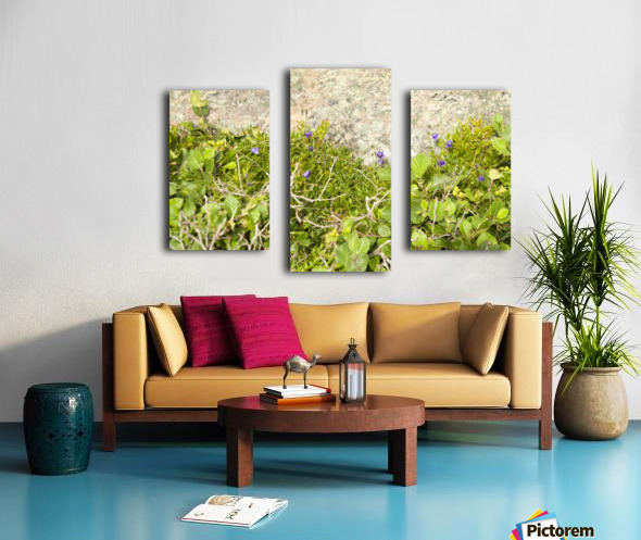 Cape Spears Flowers and vegetation  Canvas print