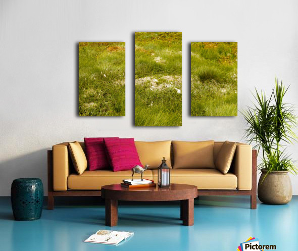 Cape Spears Flowers and vegetation 1 Canvas print