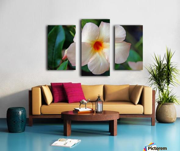 Mandevilla In Apricot Canvas print