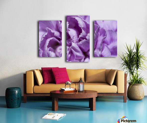 Purple Carnation Canvas print