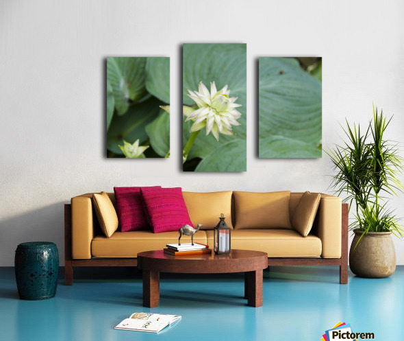 Hosta Bloom 1 Canvas print