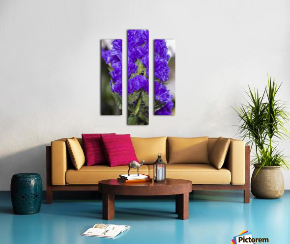 Purple Statice Flower Canvas print