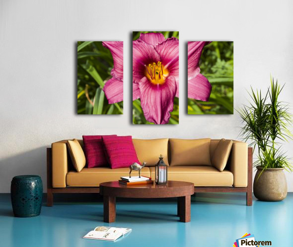 Purple Stella Doro Day Lily Flowers 2 Canvas print